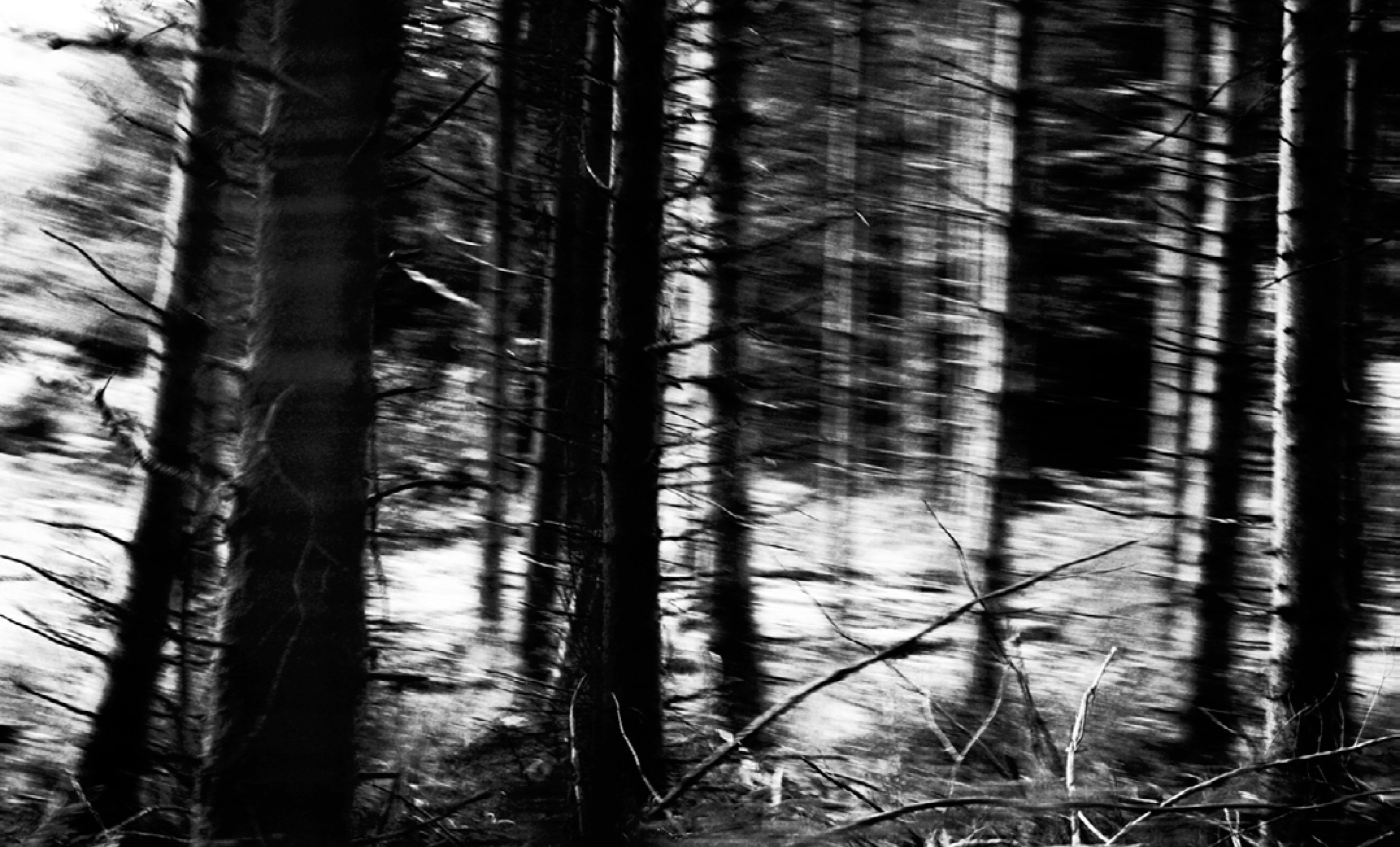 Forêt ©Dan Ramaën